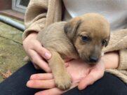 Pieski do adopcji_2